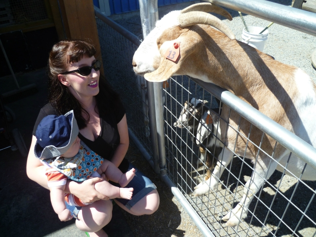 Checking out the little petting zoo at Krause Berry Farms. This goat freaked me out, but Finn seemed to like the animals.